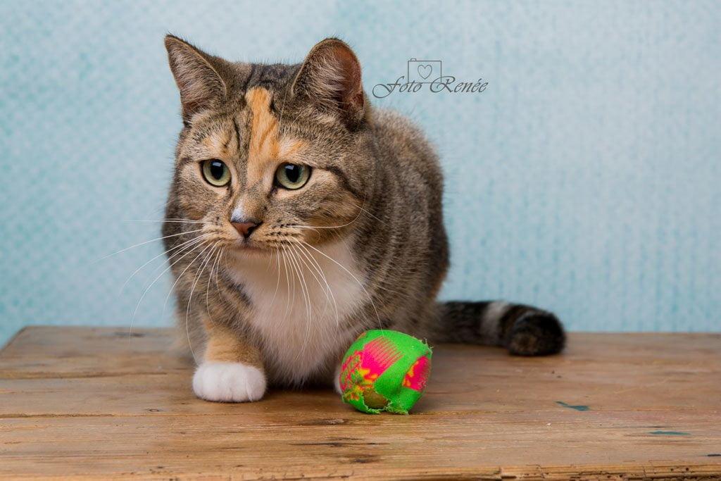 Fotoshoot van mijn lieve cyperse kat