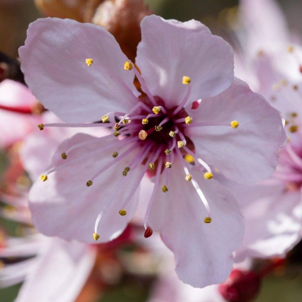 Bloem close up roze